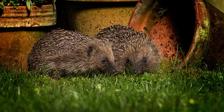 Intro to Hedgehogs tickets
