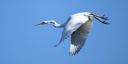 Birding Bald Head Island