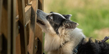 Therapeutic Scentwork for Every Dog tickets
