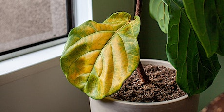 Basic Houseplant Troubleshooting: 7 Common Indoor Plant Problems LIVESTREAM tickets
