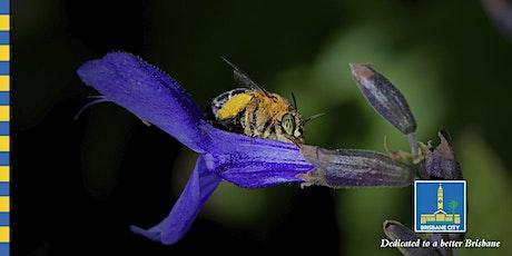 Australian Pollinators Week - Companion Planting - 11:30am Sunday tickets