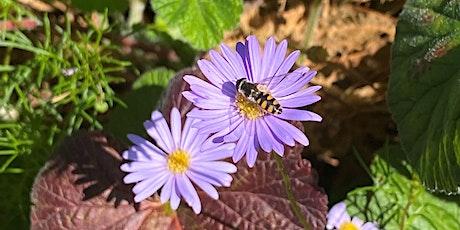 Darebin's Wild Pollinator Count 2021 tickets