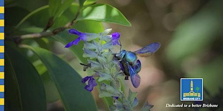 Australian Pollinators Week - Physic Garden Walkthrough - 10:45am Sunday tickets