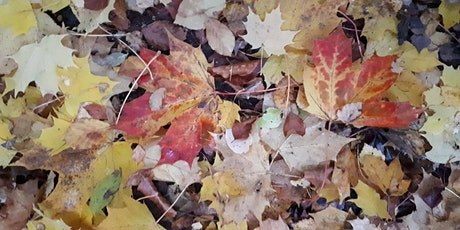 Wild Rooted-Women's Circle in Nature Sunday 31st October(Samhain)9.30-12.30 tickets
