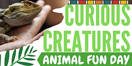 Curious Creatures // Creaduriaid Chwilfrydig tickets