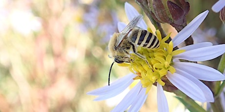 Introduction to Solitary Bees tickets