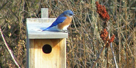 NJ Audubon Dirty Hands Garden Club: Bluebird Nestbox Workshop tickets