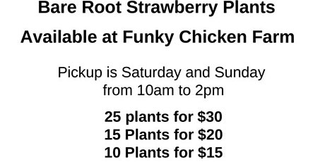 Bare Root Strawberries Available At Funky Chicken Farm This Weekend tickets