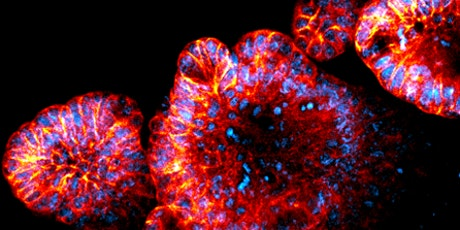 Designing biomaterials for tissue repair and disease modelling (ONLINE) tickets