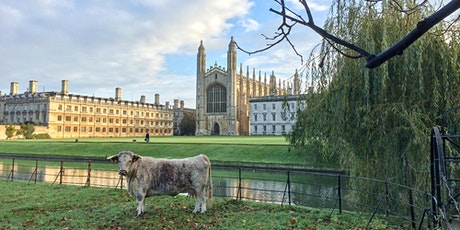 8th Nov - 14th Nov: King's College Chapel & Grounds - Self Guided Visit tickets