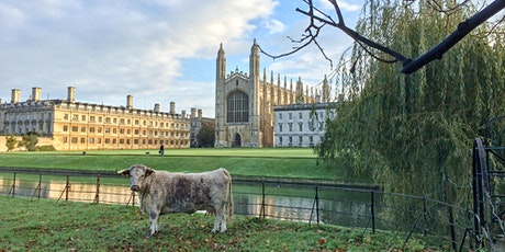 18th Oct - 24th Oct: King's College Chapel & Grounds - Self Guided Visit tickets
