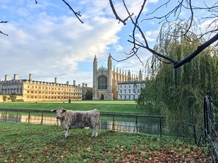 22nd Nov - 29th Nov: King's College Chapel & Grounds - Self Guided Visit tickets