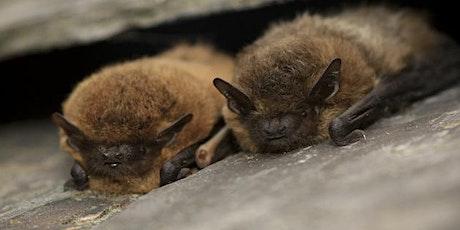 The Bay: Bat Walk tickets
