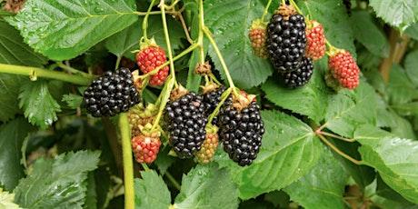 Brambles & Berries - Common plants in Autumn tickets