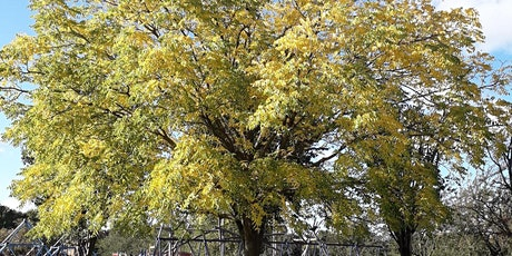 Welcome to King George's Park - Autumn tree walk tickets