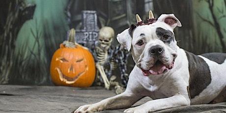 Seattle's Best Halloween Events 2021 tickets