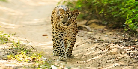 The Sri Lankan Leopard - the need for Conservation & Co-Existence tickets