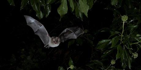 Bat walk at Kilkenny Fields tickets