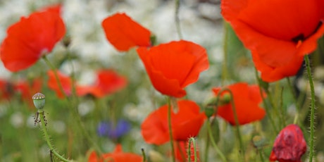 Remembrance Sunday tickets