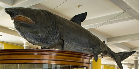 Let's Talk Science Festival: Jawsome Sharks tickets