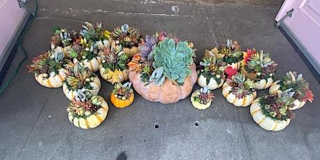 ThanksLiving Succulent Pumpkin Workshop tickets
