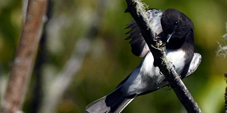 Millicoma Birding tickets