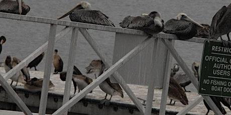 Birding in Charleston Marina tickets