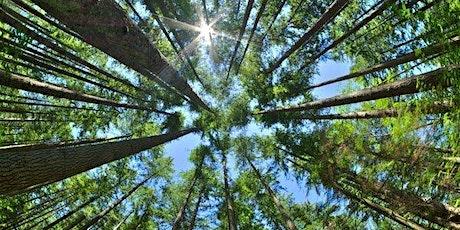 Gaia Soul Sharing Circle - Nature tickets