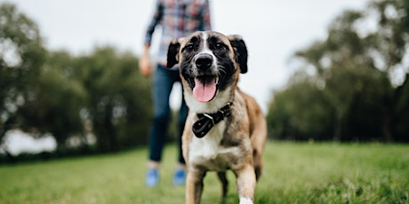 Group Dog Training in San Francisco - Starts Thurs Dec 9th - 6pm Session tickets