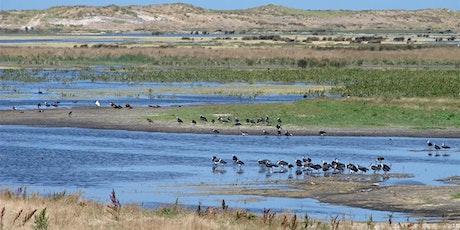 Piccaninnie Swamp wetlands and birdwatching walk tickets