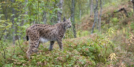 Lynx to Scotland tickets