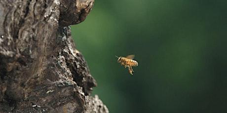 FAMILIENKINO: Tagebuch einer Biene Tickets