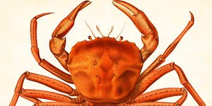 28th Annual Rotary Club of Citrus Heights Crab Feed