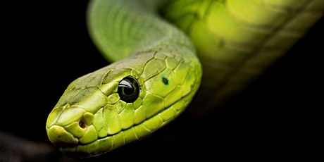BKids: Radicool Reptiles tickets