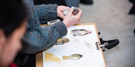 Wild Life Drawing: Eagles at Walthamstow Wetlands tickets