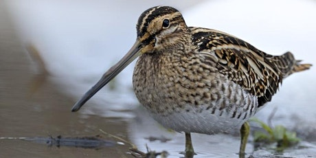 Winter Bird ID - hybrid event (2 part course - online and in person) billets