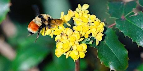 Pollinator Gardens: Fall & Winter-Blooming Plants LIVESTREAM tickets