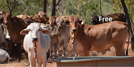 Sensible Supplementation – Beef Cattle tickets