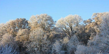 City Branch Walk: Wyevale Wood - and beyond! tickets