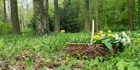 Wild Medicine: A Herbal Plant ID Walk tickets