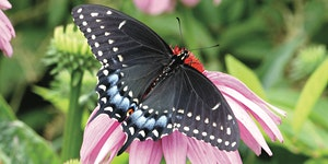 Seventh Annual Butterfly Day