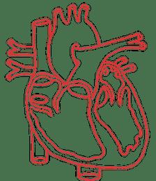 Structural Heart Disease Australia logo