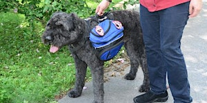 Service Dog Training (What you need to know) -...