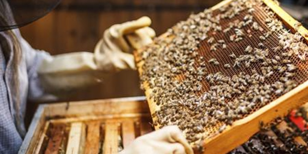 how to become a professional beekeeper