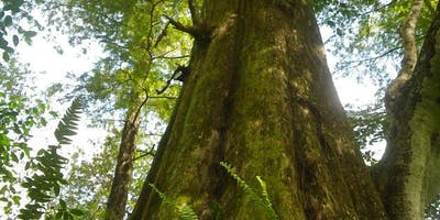 Ancient Forest Walking Tours