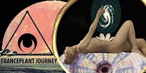 TrancePlant Journey :: Activate SACRAL CHAKRA