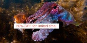 Swim with Giant Cuttlefish - Stony Point (near...