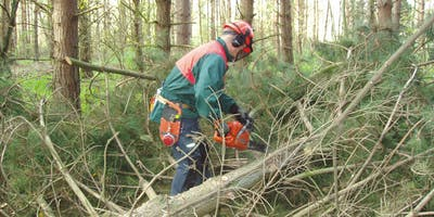 Safe Felling of Trees up to 380mm (LANTRA 2541)