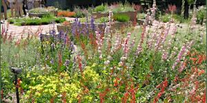WEBINAR - Designing a Native Plant Garden - Thursday,...