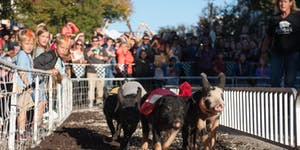 15th Annual Pigtown Festival